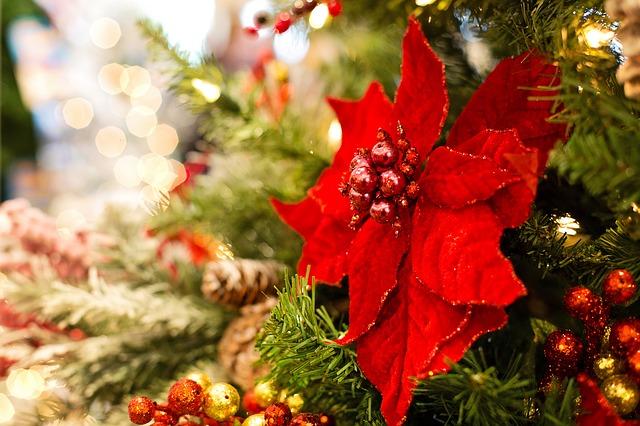 vánoční kytka