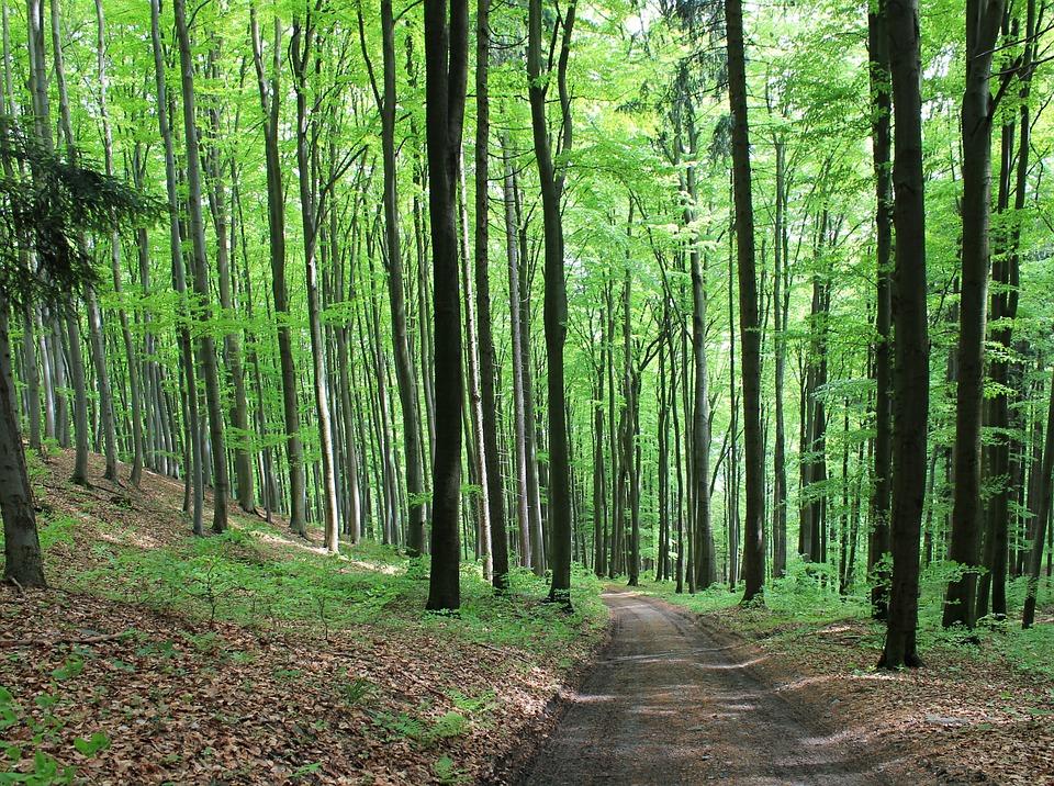 les na Vysočině